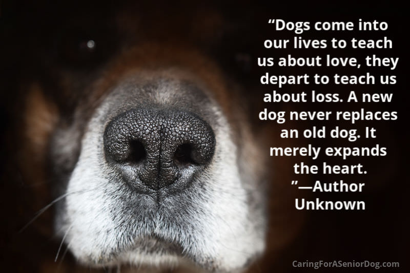 Senior Dog Quote - Dogs teach us about love and loss and expand our hearts