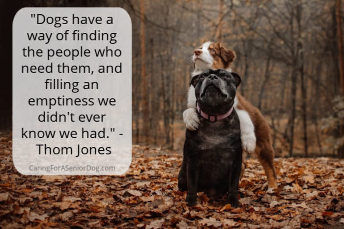 Senior Dog Quote - Dogs fulfill a need we didn't know we had