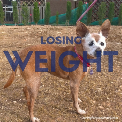 losing weight is a symptom of diabetes in dogs