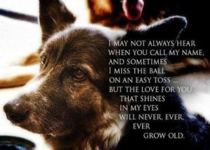 Senior Dog Quotes - Caring for a Senior Dog