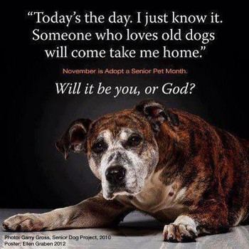 Senior Dog Quotes - Caring for a Senior Dog