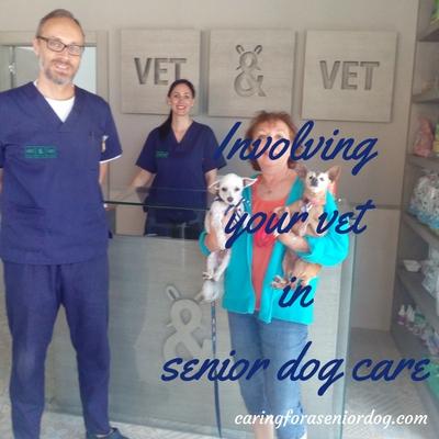 Involving your vet in senior dog care
