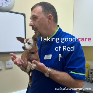 involve your vet in senior dog care