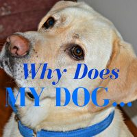 why does my dog series