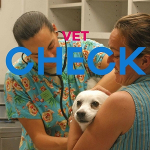 vet check to determine cause of vomiting