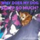 why does my dog sleep so much