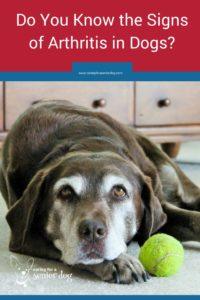 arthritis symptoms in dogs