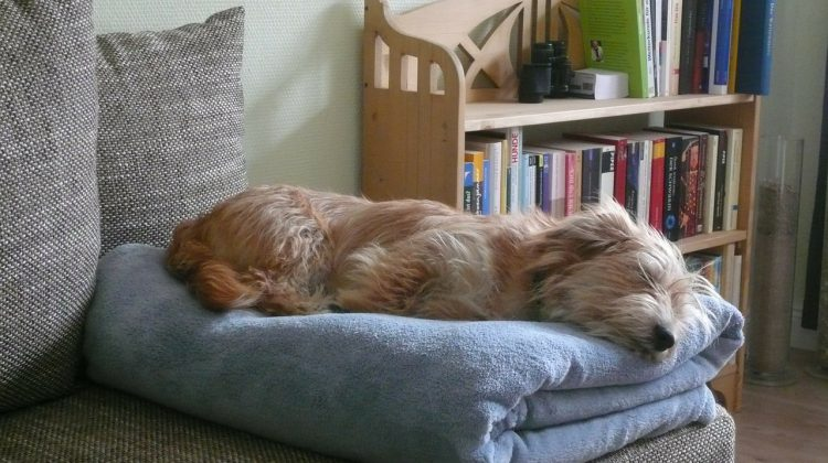 how to keep an old dog comfortable