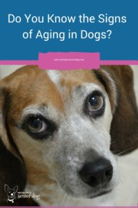 Do you know what the signs of aging in dogs are