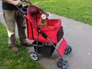 Red uses the confidence deluxe four wheel pet stroller