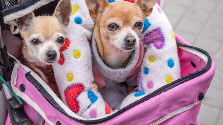 21 reasons why you should put a pet stroller