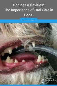 canines and cavities the importance of oral care in dogs