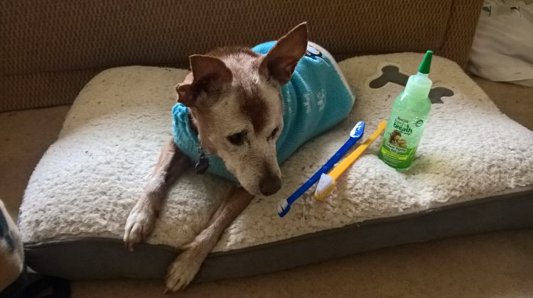 the importance of oral care in dogs