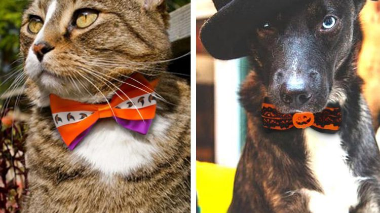 Hixixi Halloween bow ties for dogs and cats