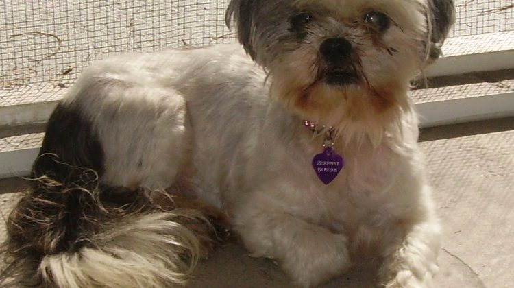 our sweet senior dog Josephine suffered from hearing loss in dogs