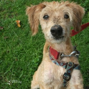 so many reasons why you should adopt a senior dog