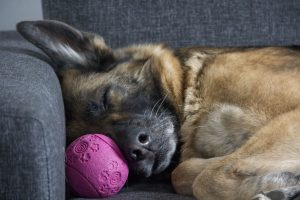 how to treat arthritis pain in dogs naturally