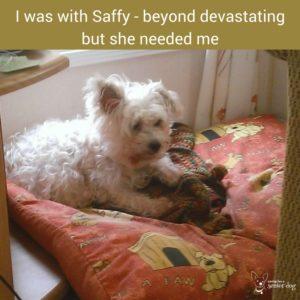 so hard saying goodbye to your dog