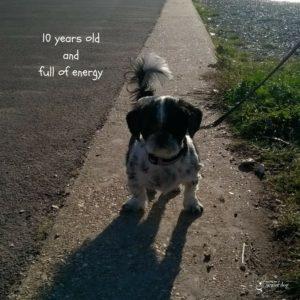 think about adopting a senior dog