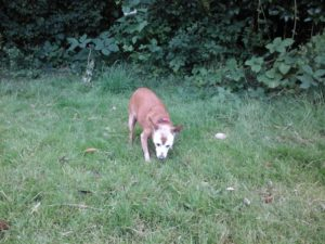 keep your senior dog active with a gentle stroll