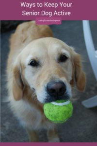 Ways to Keep Your Senior Dog Active
