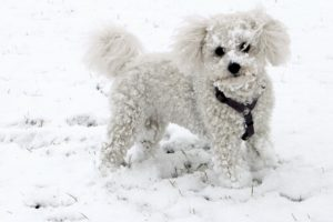 how to keep your senior dog active in the winter