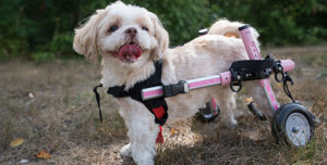 handicapped pets small rear wheelchair