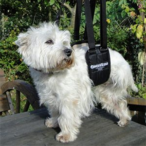 GingerLead dog support sling for small dogs