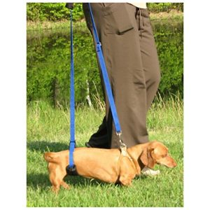 GingerLead dog support sling