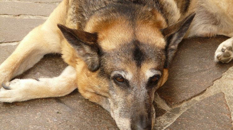treatment for dogs with arthritis