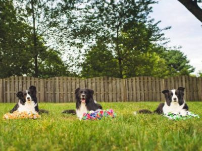 resource page to help you care for your senior dog