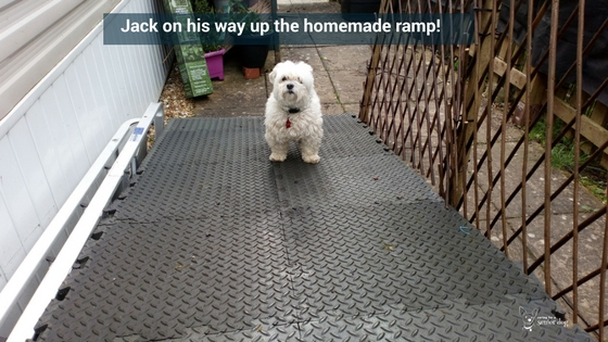 2 things you must know about dog ramps and dog stairs