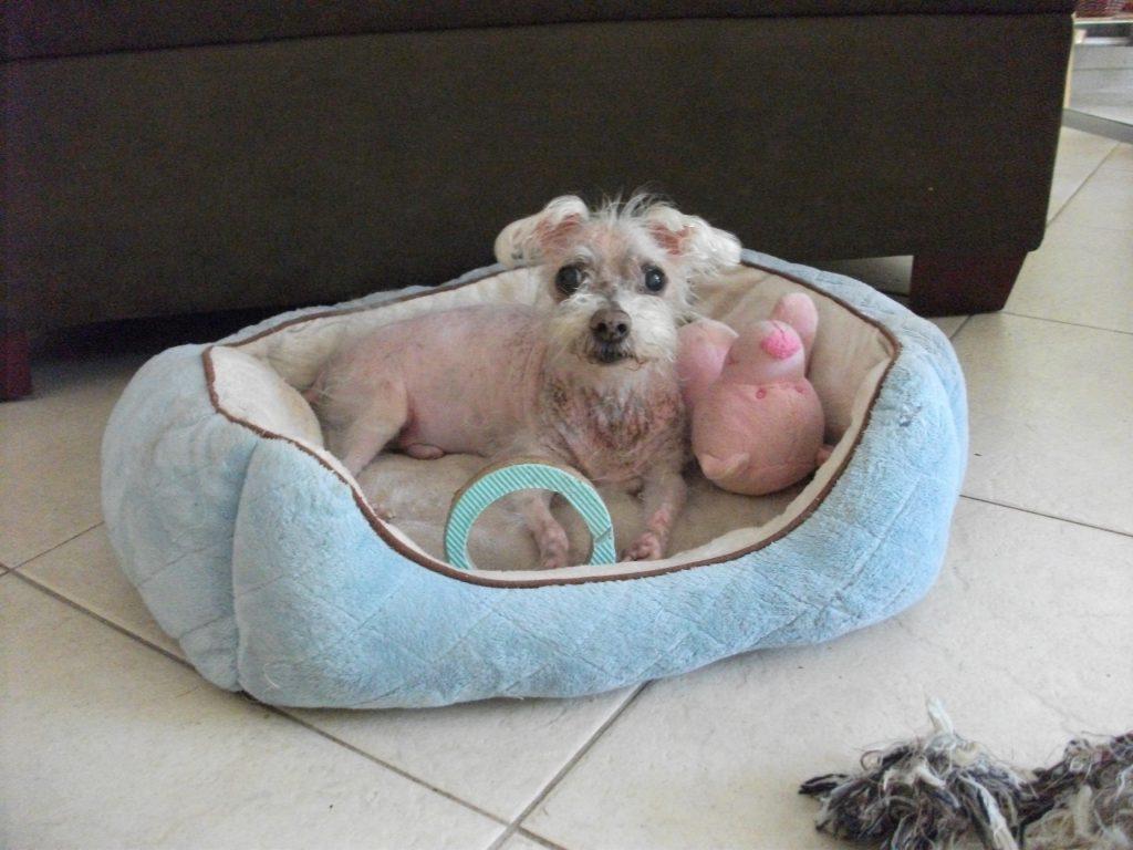 Bailey was a dog with pancreatitis