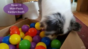 Great idea for how to entertain a bored dog