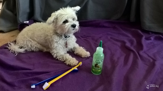 How to choose the best toothbrush for a dog