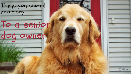 Things you should never say to a senior dog owner