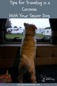 Tips For Traveling in a Caravan With Your Senior Dog