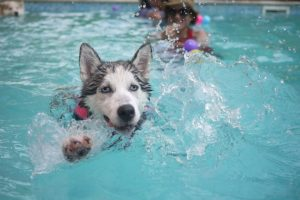 swimming is great exercise for a senior dog