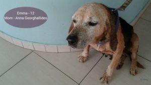 pancreatitis in older dogs