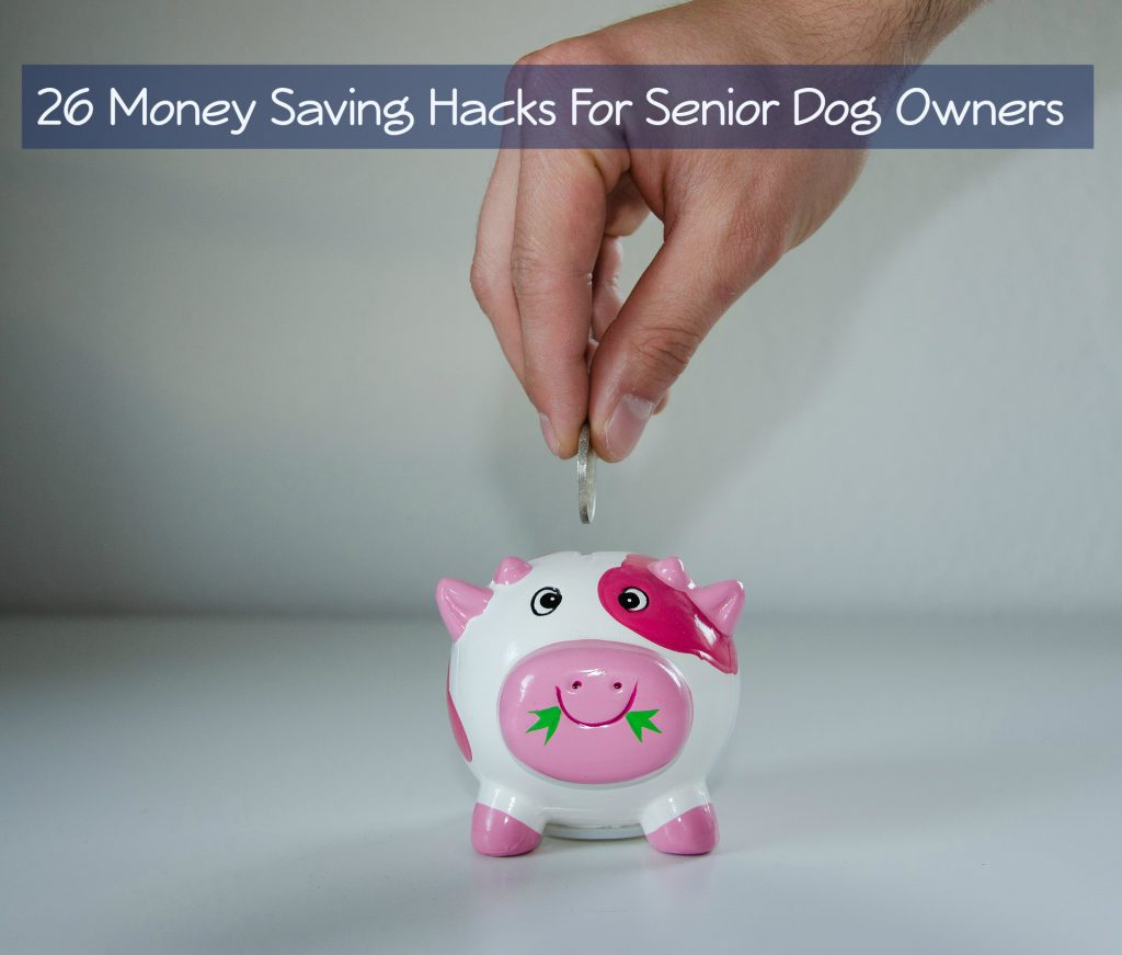 26 money saving hacks for senior dog owners