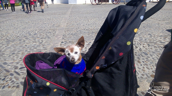 Helping you choose the best pet stroller for your senior dog