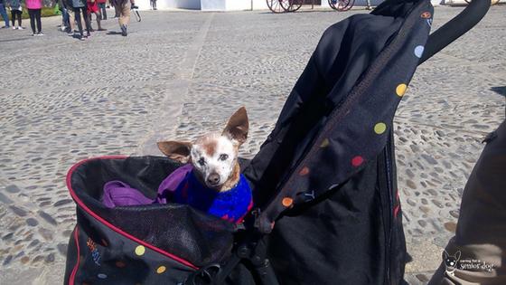 Red in her stroller in Spain