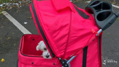 a pet stroller is a must have senior dog supply