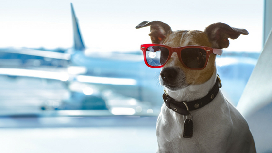 air travel with dogs