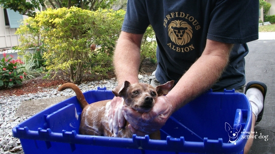 bathing your own dog is a great money saving hack