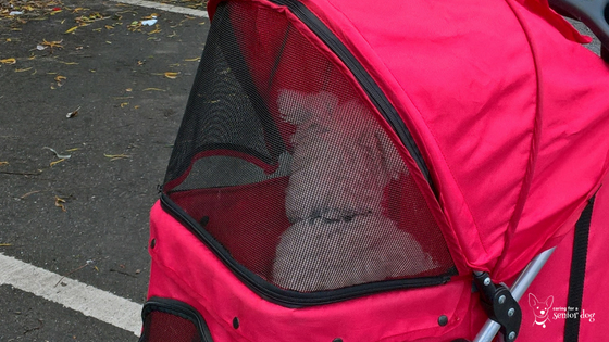 choose a pet stroller that can be fully enclosed