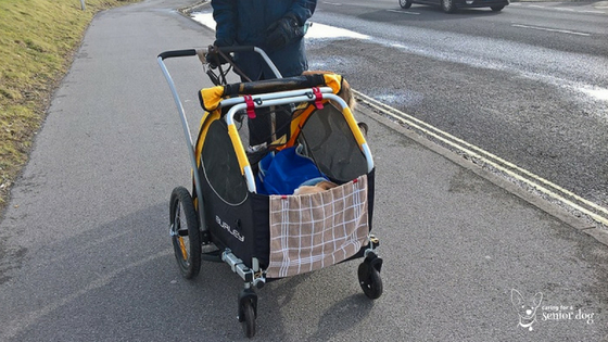 what features should you look for when choosing a dog stroller