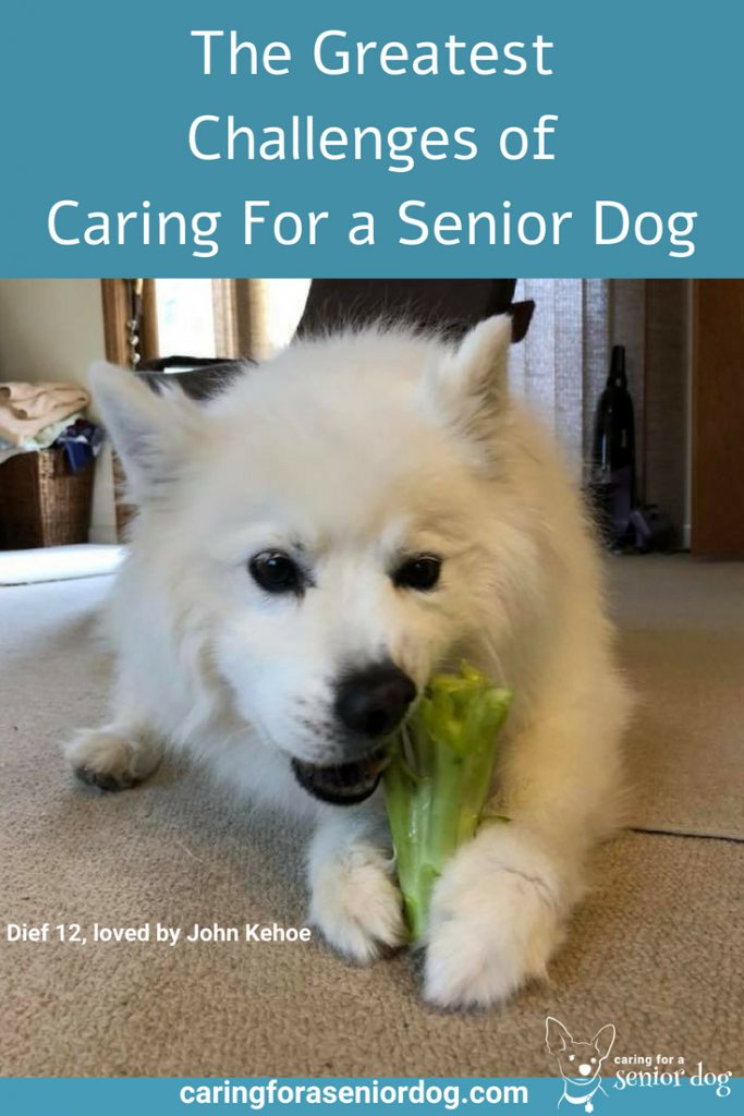 The Greatest Challenges of Caring For a Senior Dog