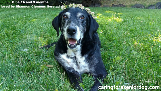 the greatest challenges facing senior dog caregivers