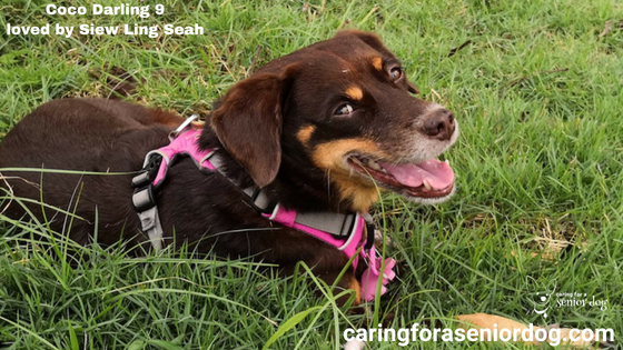 what are some of the greatest challenges of caring for a senior dog